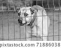 Black and white photo of homeless dog in a shelter for dogs. BW 71886038