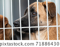 Homeless dog in a shelter for dogs 71886430
