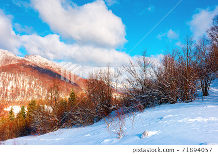 winter landscape in afternoon light. beautiful nature scenery in mountains. leafless trees on a snow covered slope. wonderful sunny weather with clouds on the sky 71894057