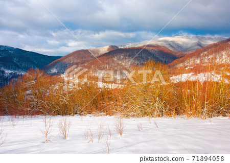 winter landscape in afternoon light. beautiful nature scenery in mountains. leafless trees on a snow covered slope. wonderful sunny weather with clouds on the sky 71894058