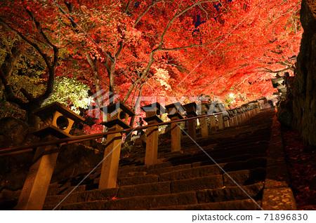 가나가와 현 _ 大山寺의 라이트 업 _ 단풍 71896830