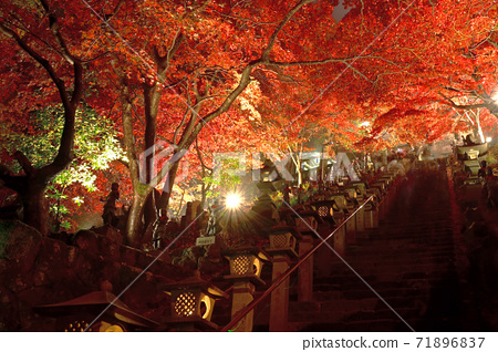 가나가와 현 _ 大山寺의 라이트 업 _ 단풍 71896837