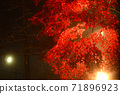 단풍의 라이트 업 (가나가와 현 다이센) 71896923