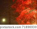 단풍의 라이트 업 (가나가와 현 다이센) 71896930