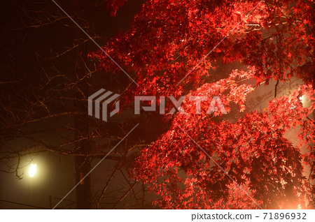 단풍의 라이트 업 (가나가와 현 다이센) 71896932