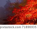 단풍의 라이트 업 (가나가와 현 다이센) 71896935