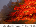 단풍의 라이트 업 (가나가와 현 다이센) 71896936
