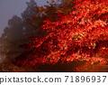 단풍의 라이트 업 (가나가와 현 다이센) 71896937