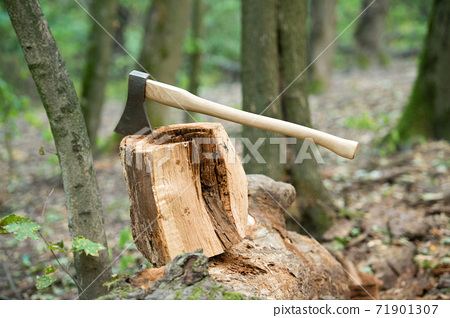 Split and cut. Large axe in stump. Splitting axe on natural  71901307