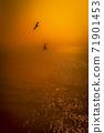 아름다운 바다와 갈매기 71901453