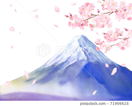 春天的花朵:櫻花和富士山風光水彩插圖(白色背景) 71906628