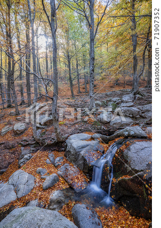 Small brook in a colorful autumn forest. Long exposure picture 71907352