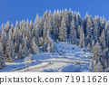 firs in winter 71911626