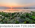 Danube Delta, Romania 71911628