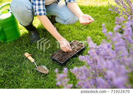 woman planting flower seeds to pots tray with soil 71922670