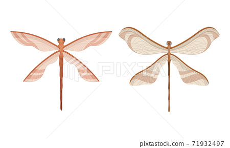 Dragonfly with Two Pairs of Strong, Transparent Wings Vector Set 71932497