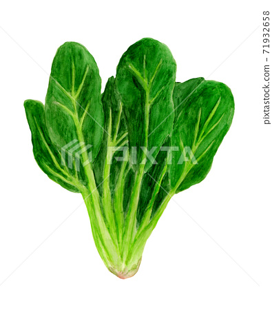 Spinach watercolor illustration 71932658