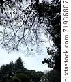 Winter sky and trees 71936807