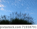 Susuki and autumn sky 71938791
