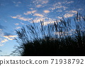 Susuki and autumn sky 71938792