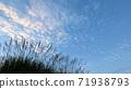 Susuki and autumn sky 71938793