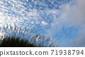 Susuki and autumn sky 71938794