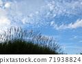 Susuki and autumn sky 71938824
