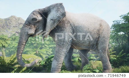 A gray African elephant walks through the green jungle in the early morning. A look at the African jungle. 3D Rendering. 71946749
