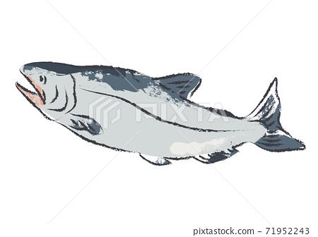 鮭魚的插圖,好像用刷子繪製 71952243