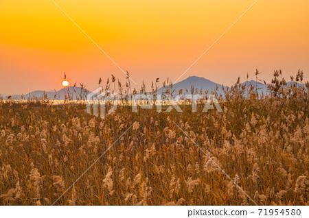 Dadaepo Beach park reed field sunset scenery at autumn in Busan, Korea 71954580