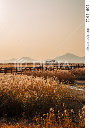 Sunset of Dadaepo Beach park at autumn in Busan, Korea 71954601