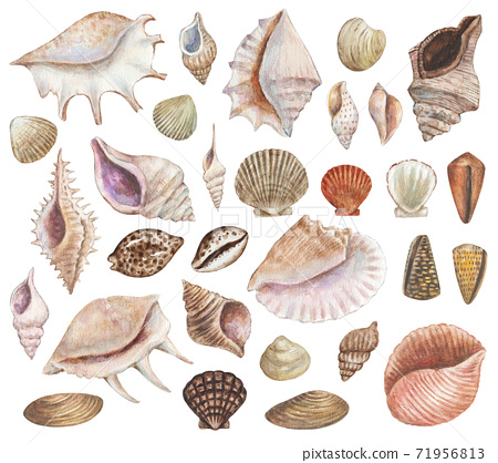 Big set of watercolor painted sea shells. Seafood and sea life design decoration elements for menu, travel, education  71956813