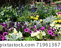 Flower bed flowers 71961367