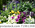 Flower bed flowers 71961368
