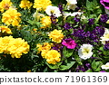 Flower bed flowers 71961369