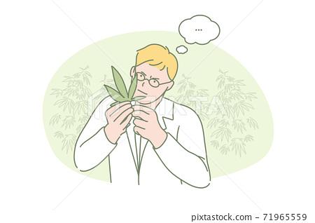 Marijuana, research, medical, science concept 71965559