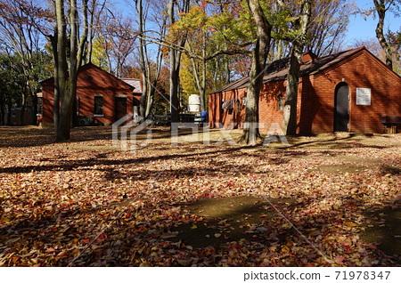 11 월 세타 가야 483 단풍과 낙엽과 미니 SL 역사 · 세타 가야 공원 71978347