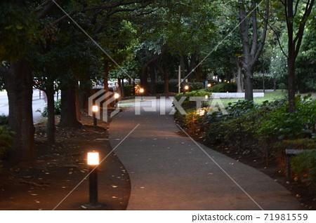 황혼의 길 녹색과 등불과 산책 71981559
