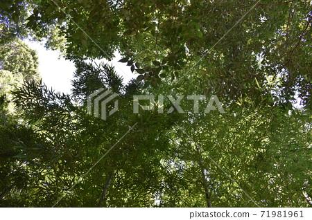 대나무 덤불 전망 71981961