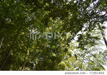 대나무 덤불 전망 71981968