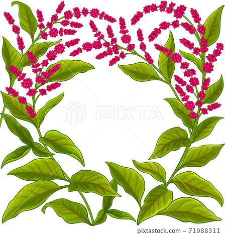 amaranth vector frame 71988311