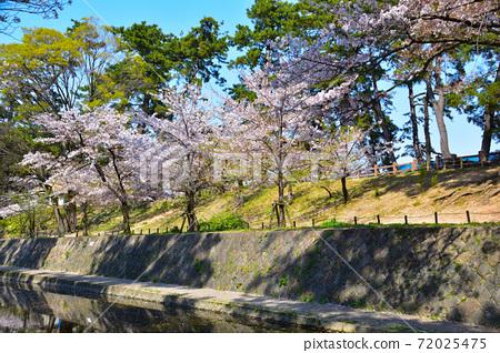 桜景 夙川 72025475