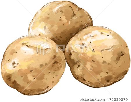 감자 3 개 일러스트 리얼 72039070