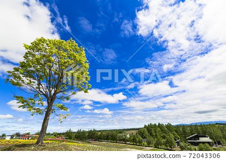 初夏的藍天和北海道美瑛町的四季彩之丘 72043306