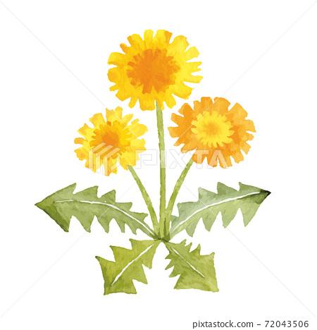 蒲公英水彩插圖春天的花朵 72043506