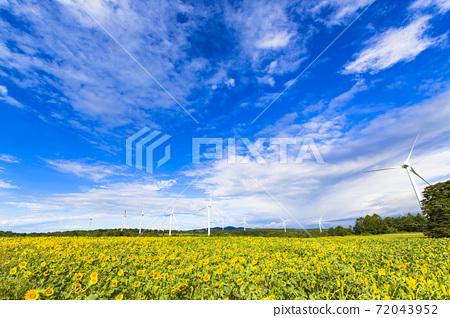 福島縣郡山市努諾比基高原上的藍天和向日葵 72043952