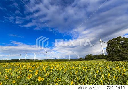 福島縣郡山市努諾比基高原上的藍天和向日葵 72043956