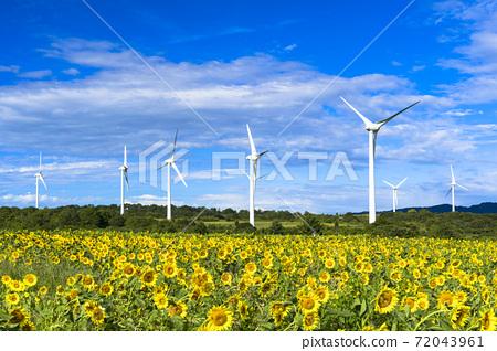 푸른 하늘과 누노 비키 고원의 해바라기 후쿠시마 현 코리 야마시 72043961