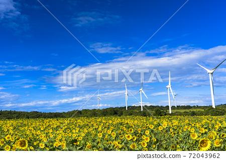 福島縣郡山市努諾比基高原上的藍天和向日葵 72043962