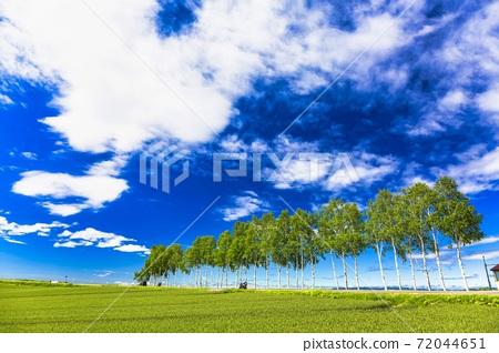 北海道美瑛町的藍天和白樺樹的行 72044651